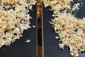 Découpe matière bois nette et précise. Copeaux de l'usinage du bois en plaque